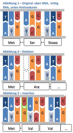 ▷ Mutationsarten Beispiele, Übersicht und Definition